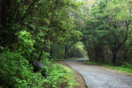 sgnp-forest-road-1