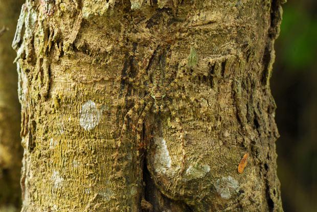 lichen-spider_2077549i