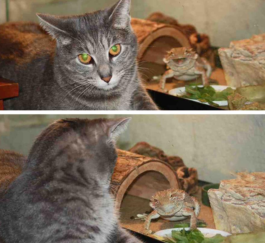 funny-animal-photobombs-16__880 (1)