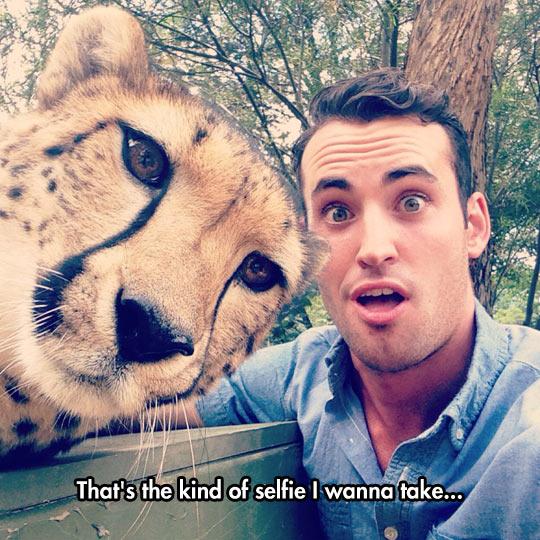 funny-guy-tiger-surprised-selfie