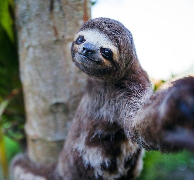 23-funniest-animal-selfies-8