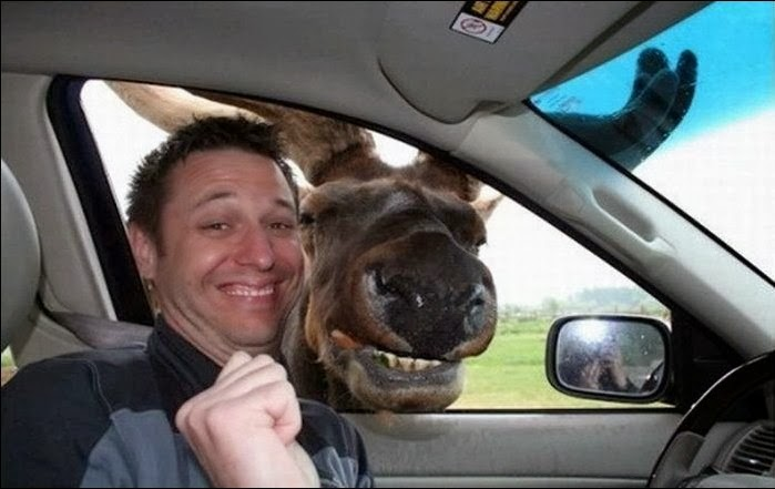 funny-animal-selfie-034