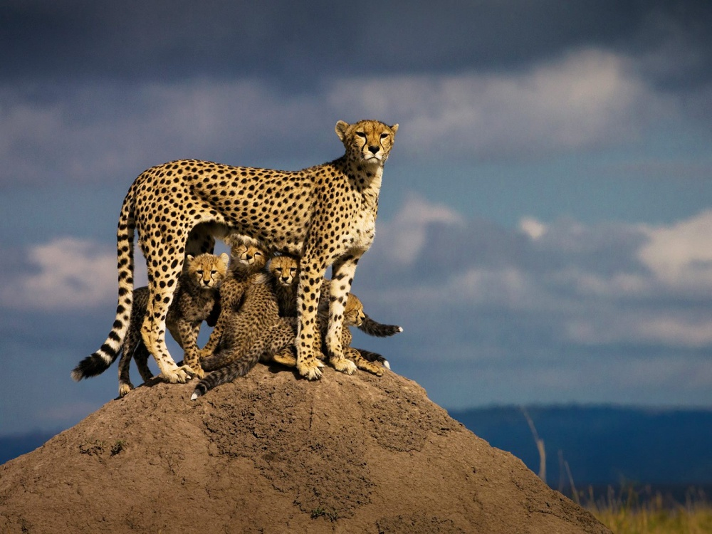 A mother in the African wilderness