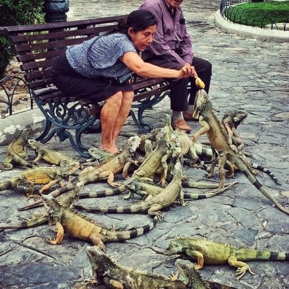 Feeding the 'dragons' in Ecuador