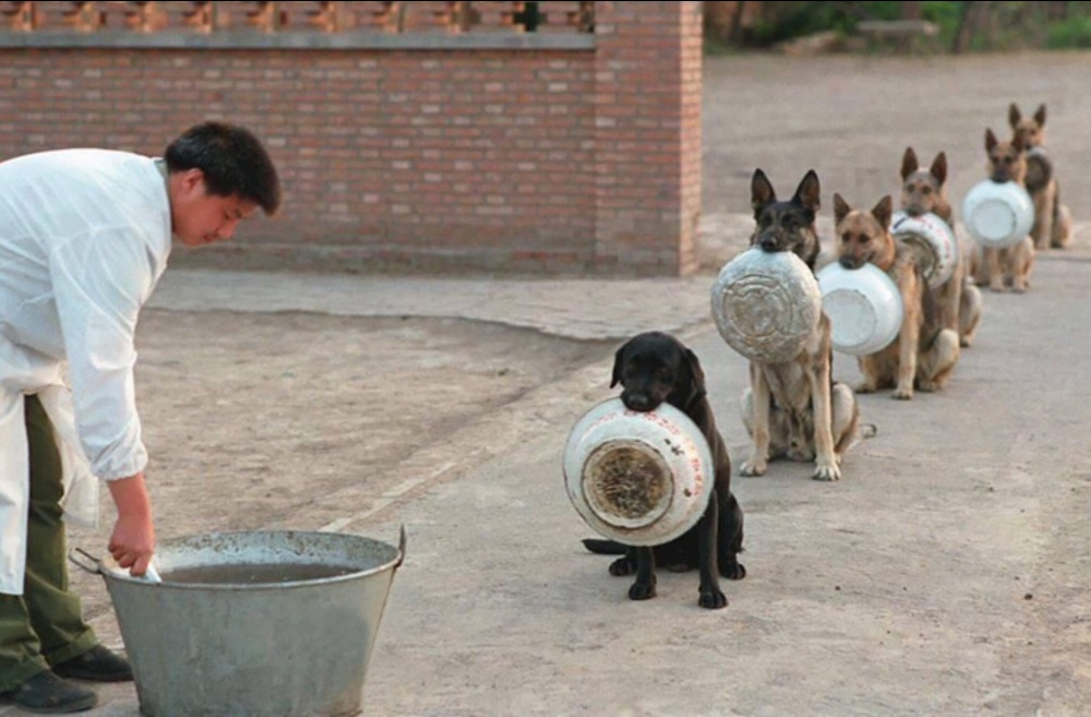 Police dogs in China queue for lunch