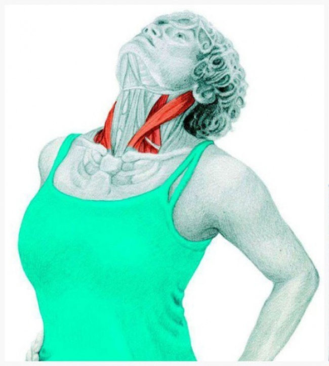 Neck extension stretch