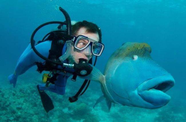 Fish Shock