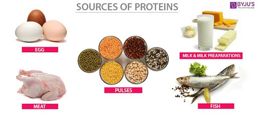 protein_sources