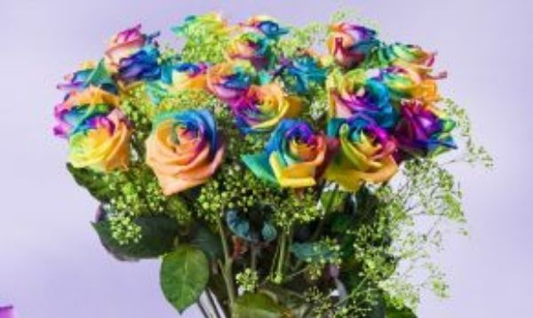 Rainbow Spray Roses