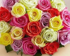 Two Dozen Assorted Roses for Mom